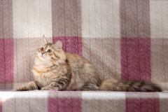 sasha.vyazmina-photo-3924