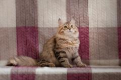 sasha.vyazmina-photo-3929